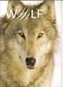 Совместный проект с журналом WOLF